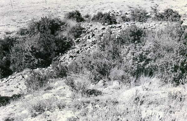 Ruinas y foso oculto por vegetación