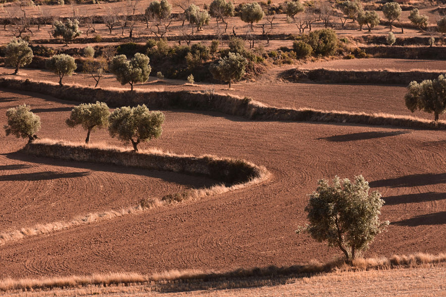Entorno del mas de Vicente. Ráfales