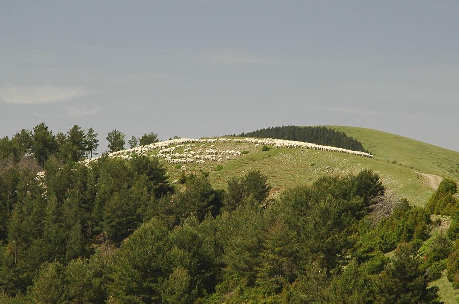 Los pastos de verano del alto Pirineo. Sierra de Sis (Bonansa)