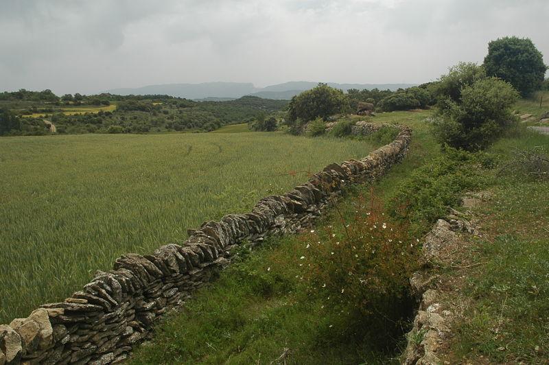 El ganado y la trashumancia: la Cañada Real de Ribagorza a su paso por Castigaleu